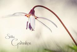 Trauerkarte mit Transparentumleger Stilles Gedenken