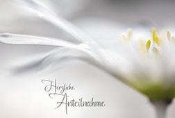Trauerkarte mit Transparentumleger Herzliche Anteilnahme